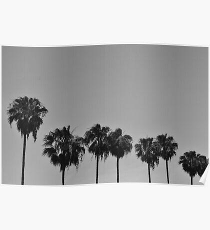 B+W Palms Poster