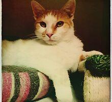 Sitting Pretty by jodi payne