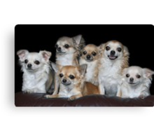 Chihuahuas group portrait Canvas Print