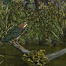 Green Heron by Walter Colvin