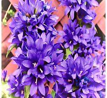 Church Flowers by tvlgoddess