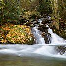Mannis Branch Falls II by Gary L   Suddath