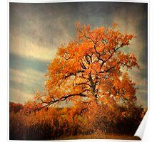 Orange Season Poster