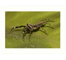 Lynx Spider Art Print
