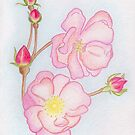Spring Roses Drawing  by Lael Woodham