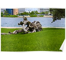 Driftwood of Miami Florida Poster