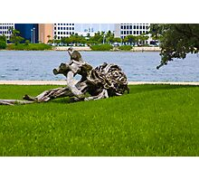 Driftwood of Miami Florida Photographic Print