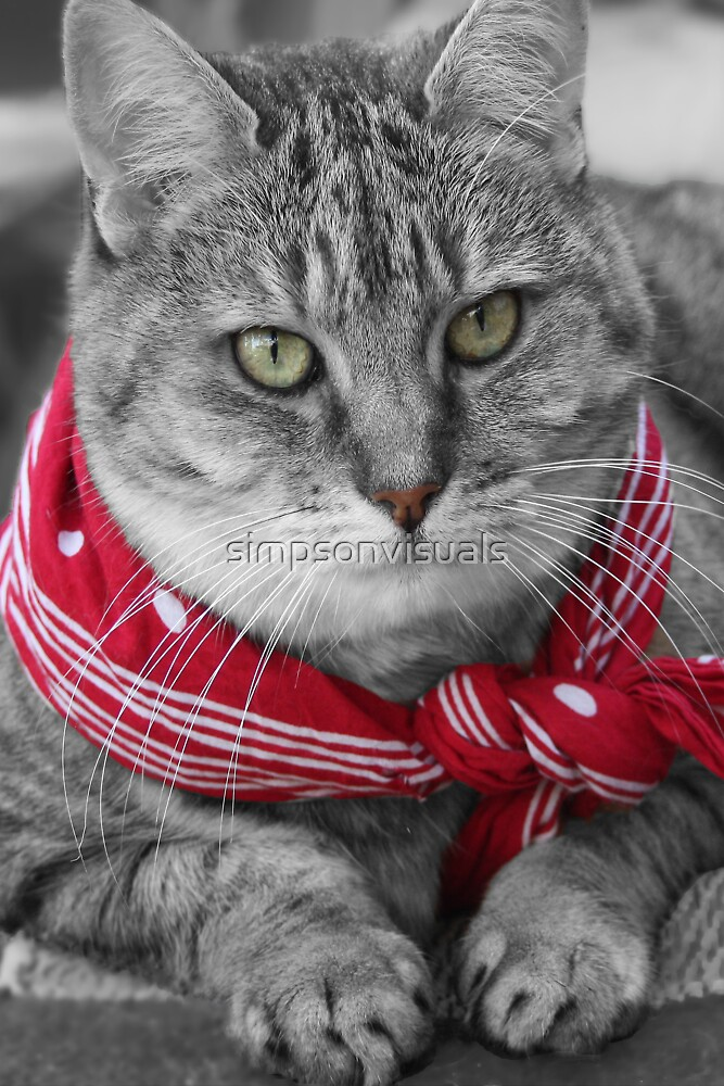 Tabby Cat with a Red Bandana by simpsonvisuals