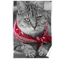 Tabby Cat with a Red Bandana Poster