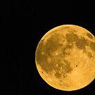 Moon Over Missoula by Bryan D. Spellman