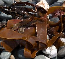 Seaweed by AlexSaunders