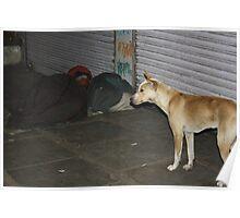 Accidental Guard Dog, Ahmedabad, Gujurat, India Poster