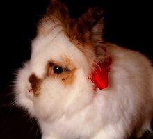 Lionhead bunny - Christmas by Arve Bettum