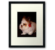 Lionhead bunny - Christmas Framed Print