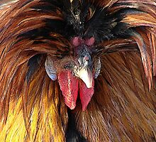 Golden Laced Polish Rooster by angelandspot