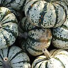 Squashes at the pumpkin patch by Duncan Drury