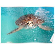 Turtle in Blue Water Poster