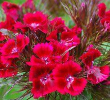 So Sweet William by Mike  West
