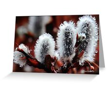 Pussy Willow Flowers Greeting Card