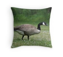 Canada Goose - on a bed of white clover Throw Pillow