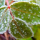 Icy Frosting.. Leaf. by MaeBelle