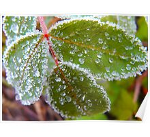 Icy Frosting.. Leaf. Poster