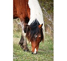 Hungry Horse Photographic Print