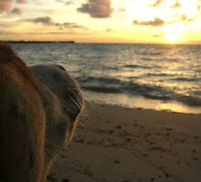 Fijian Dog by Natalie Broome