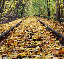 Yellow Leaves Coating Railway by Nikolaj Masnikov