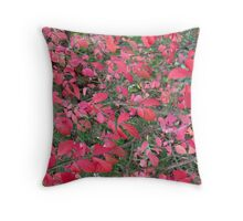 Hovering above an Autumn soil Throw Pillow