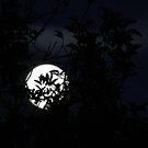 November Moon by Anima Fotografie