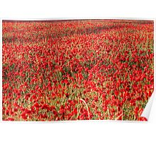 Flanders Poppies Poster