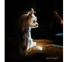 Contemplations of the Princess Photographic Print
