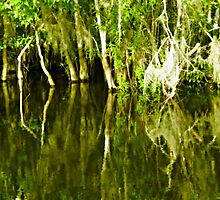 swamp reflection by ZSUZSA LADO