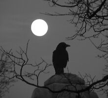 Moonlit Crow by gothicolors