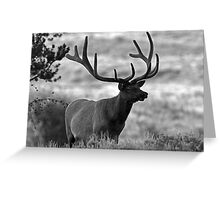 Standing Proud Greeting Card