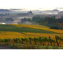 Yellow vineyard Photographic Print