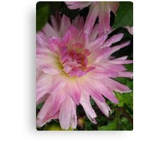 Playful Dahlia Canvas Print