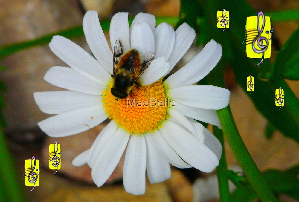 A Daisy A Day by MaeBelle