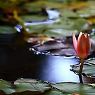 Blooming by Nuno Pires