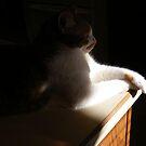 Molly Enjoying The Sunshine by Marie Sharp