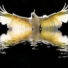 Rising sulphur crested cockatoo by Sheila  Smart