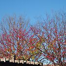 Trees at Conner Prairie by Artophobe