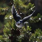 moose-bird by Robert C Richmond