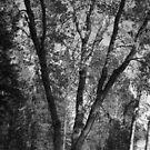 B&W Fall tree, by becca2425