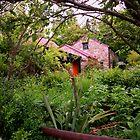 Garden, St Bathans by Steven Carpinter