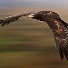 Raptor by Mark Shean