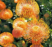 Flowers of Canningvale by John Peel