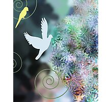 Birds and Flowers Photographic Print