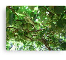 Vineyard Canvas Print